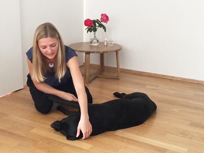 Die alternative Behandlung für einen Hund mit Epilepsie